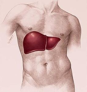 Здоровье Вашей печени NSP-1