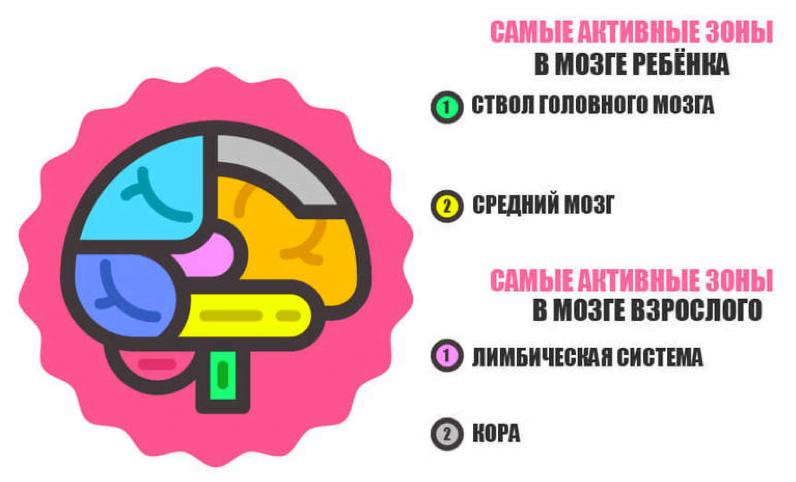 Мозг ребёнка функционирует иначе, чем мозг взрослого