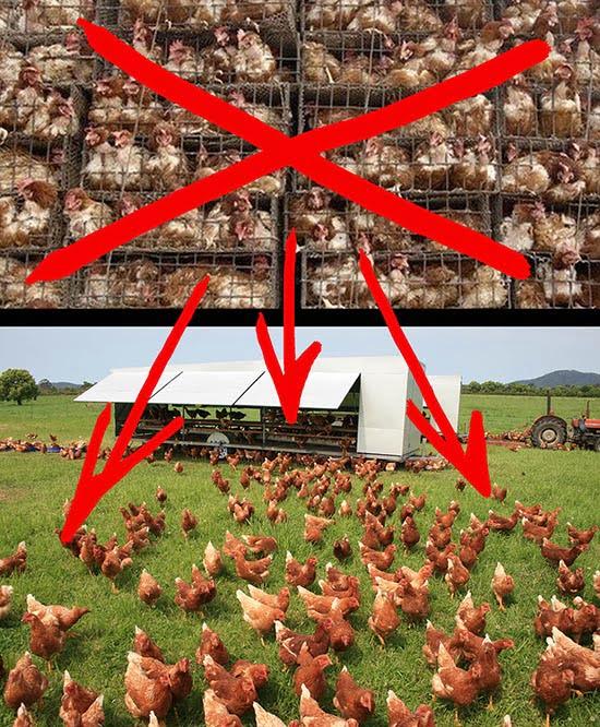 Контроль над технологиями производства продуктов питания