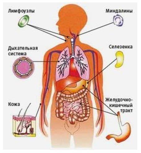 Неспецифический иммунитет