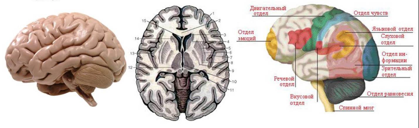 Антиэйдж мозга